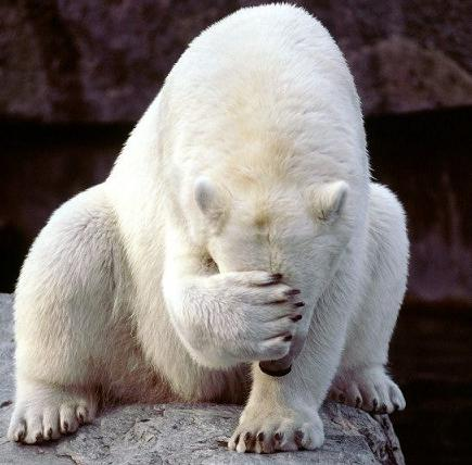 white-bear-shameful.jpg